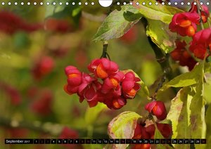 Rot - Red - Rosso - Rouge (Wandkalender 2017 DIN A4 quer)