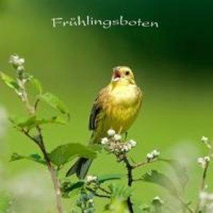 Frühlingsboten - Vogelstimmen