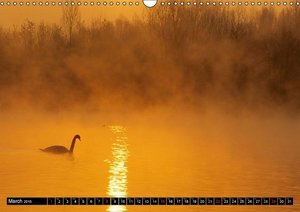 SWANS / UK-version (Wall Calendar 2015 DIN A3 Landscape)