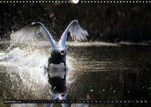 SWANS / UK-version (Wall Calendar 2015 DIN A3 Landscape)