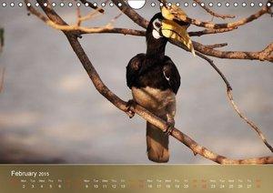 Hornbills from Southeastern Asia (Wall Calendar 2015 DIN A4 Land