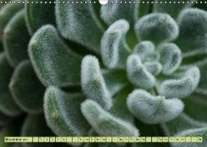 Natural Shapes and Surfaces (Wall Calendar 2015 DIN A3 Landscape