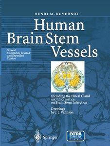 Human Brain Stem Vessels