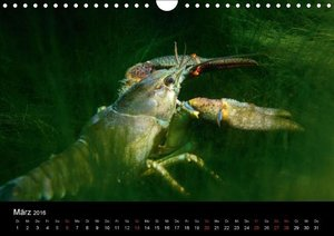 Krebs und Hecht - Ritter und Räuber unserer Seen (Wandkalender 2