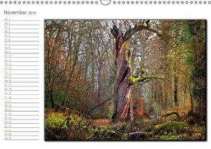 Roder, P: Neuenburger Urwald (Wandkalender 2015 DIN A3 quer)