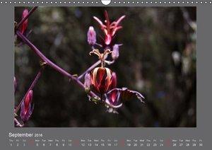 Flowers of Madeira - UK Version (Wall Calendar 2016 DIN A3 Lands