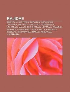 Rajidae
