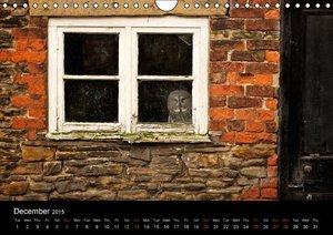 Owls (Wall Calendar 2015 DIN A4 Landscape)