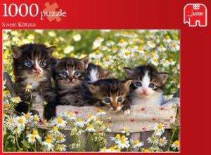 Jumbo 17036 - Süße Kätzchen, Puzzle, 1000 Teile