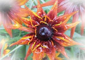 Blumen und Blüten (Posterbuch DIN A2 quer)