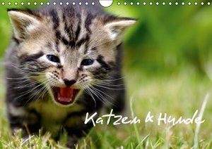 Katzen & Hunde (Wandkalender 2016 DIN A4 quer)