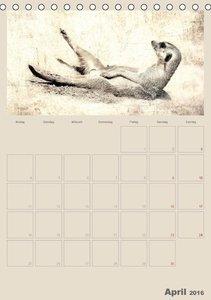 Lustige Erdmännchen (Tischkalender 2016 DIN A5 hoch)