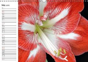 Flora Up Close and Personal (Wall Calendar 2015 DIN A3 Landscape