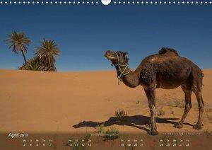 Sahara - Land der unendlichen Weite (Wandkalender 2017 DIN A3 qu