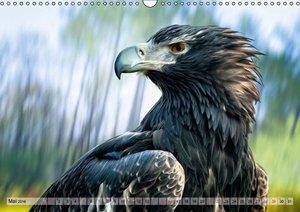 Faszinierende Greifvögel hautnah (Wandkalender 2016 DIN A3 quer)