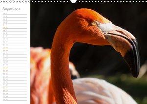 Der Flamingo Kalender (Wandkalender 2016 DIN A3 quer)