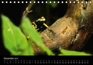 Exotische Frösche (Tischkalender 2016 DIN A5 quer)