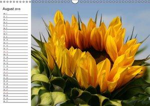 Sonnenblumen Impressionen (Wandkalender 2016 DIN A3 quer)