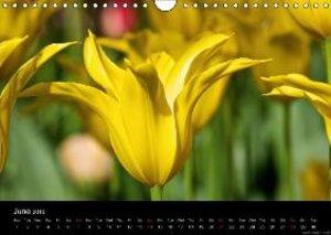 Serys, V: Flowers / UK-Version