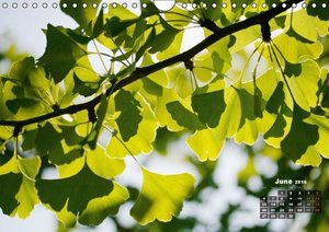 Shrubs and Trees in Spring and Autumn (Wall Calendar 2016 DIN A4
