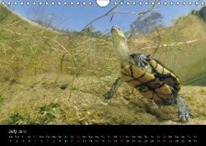 WILD - Animal Calendar 2015 / UK Version (Wall Calendar 2015 DIN
