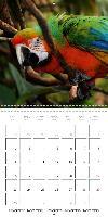 Parrots - Faces of colorful birds (Wall Calendar 2015 300 &times - zum Schließen ins Bild klicken