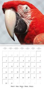 Parrots - Faces of colorful birds (Wall Calendar 2015 300 &times