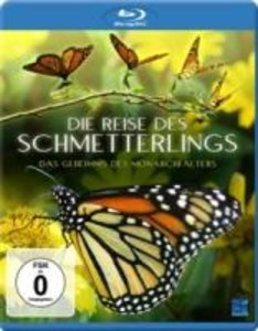Die Reise des Schmetterlings