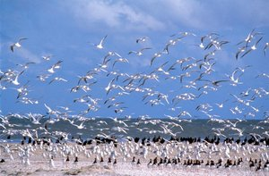 Nomaden der Lüfte - Das Geheimnis der Zugvögel