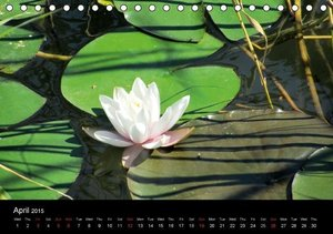 Pure Nature / UK-Version (Table Calendar 2015 DIN A5 Landscape)