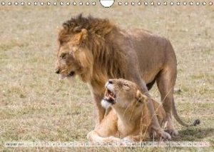 Gerlach, I: Emotional Moments: Lionsfight & Lionslove UK Ver