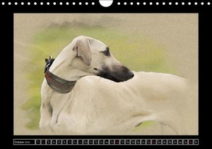 Sighthounds 2016 (Wall Calendar 2016 DIN A4 Landscape)
