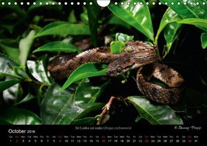 SNAKES / UK-Version (Wall Calendar 2016 DIN A4 Landscape)