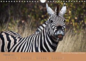 Pavlowsky Photography, M: Afrika Impressionen (Wandkalender