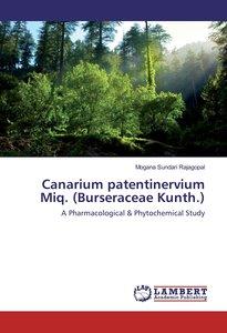 Canarium patentinervium Miq. (Burseraceae Kunth.)