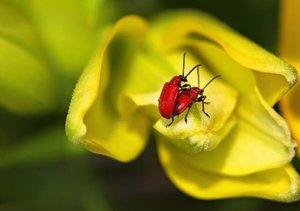 Kleine Promenade - Insektenwelt (Tischaufsteller DIN A5 quer)