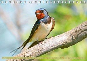 Heimische Singvögel (Tischkalender 2018 DIN A5 quer)