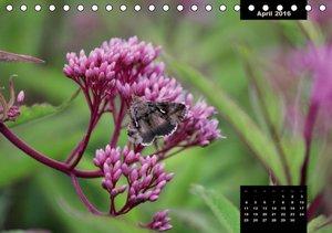 Flora&Fauna Impressionen aus dem Park der Sinne (Tischkalender 2