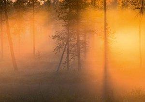 Wild Lapland (Poster Book DIN A3 Landscape)