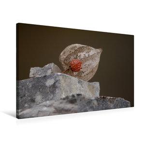 Premium Textil-Leinwand 75 cm x 50 cm quer Physalis Frucht