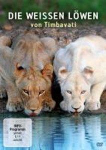 Die weißen Löwen Von Timbavati