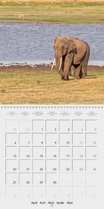 Endangered - Elephants of Sri Lanka (Wall Calendar 2015 300 × 30
