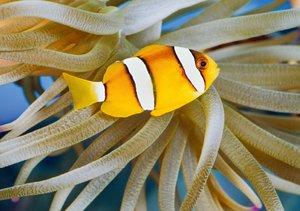 Zauberhafte Fische - Aquarienfotografie (Tischaufsteller DIN A5