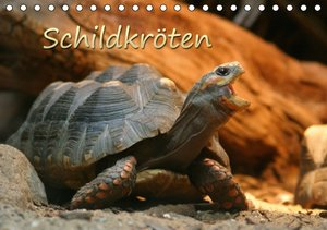 Schildkröten (Tischkalender 2016 DIN A5 quer)
