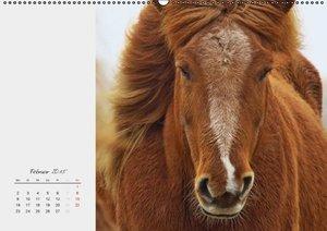 Dölling, A: Pferde von der deutschen Nordseeküste (Wandkalen