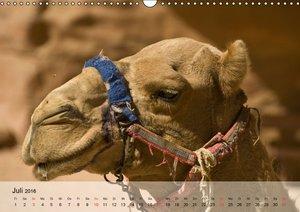 Kamele in der Wüstensonne (Wandkalender 2016 DIN A3 quer)