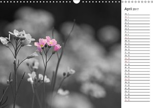 Schwarz-Weiß Malereien Terminkalender von Tanja Riedel für Öster