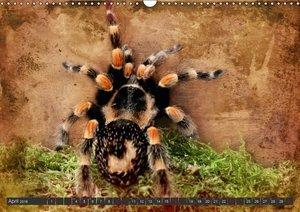 Besondere Tierwelt (Wandkalender 2016 DIN A3 quer)