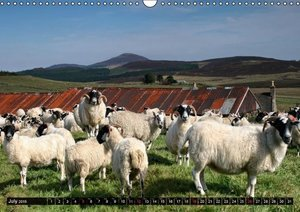Sheep Portraits (Wall Calendar 2015 DIN A3 Landscape)