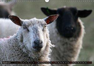 Sheep Portraits (Wall Calendar 2015 DIN A3 Landscape)